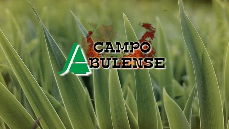 campo-abulense
